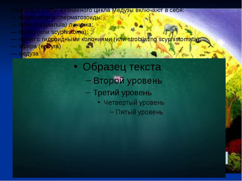 Основные этапы жизненного цикла Медузы включают в себя: — яйцеклетки и сперма...