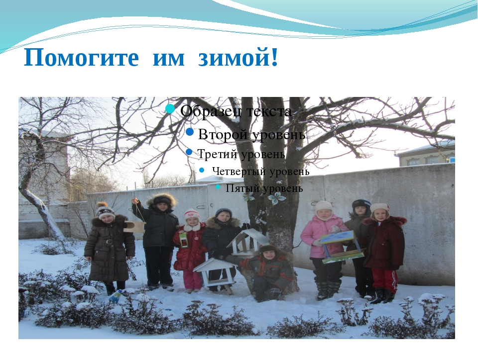 Помогите им зимой!