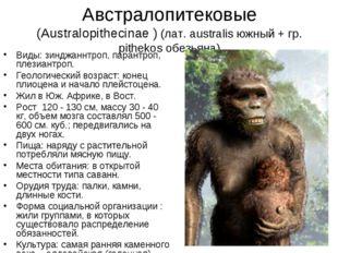 Австралопитековые (Australopithecinae ) (лат. australis южный + гр. pithekos