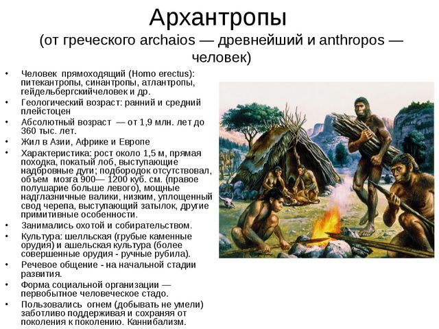 Архантропы (от греческого archaios — древнейший и anthropos — человек) Челове...