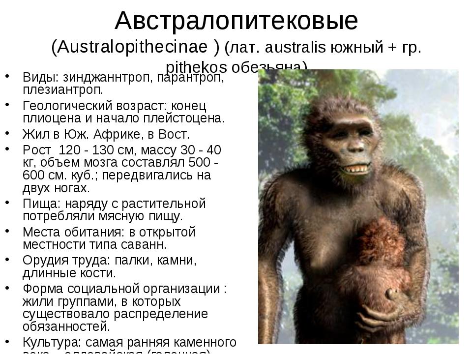Австралопитековые (Australopithecinae ) (лат. australis южный + гр. pithekos...