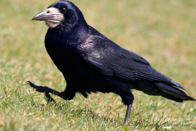 D:\Изображения\Птицы\normal_1330611551.jpg