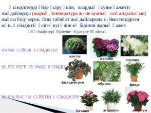 Өсімдіктерді үйде өсіру үшін, олардың өсуіне қажетті жағдайларды (жарық, тем
