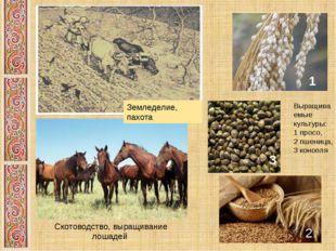 Земледелие, пахота Выращиваемые культуры: 1 просо, 2 пшеница, 3 конопля 1 3 3