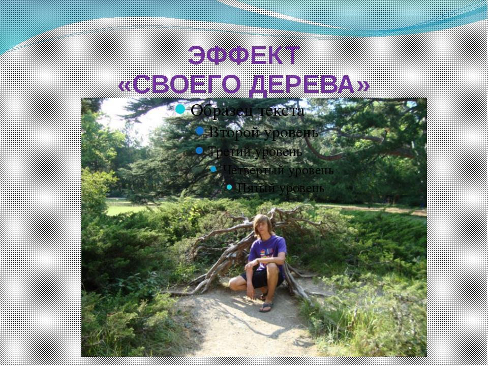 ЭФФЕКТ «СВОЕГО ДЕРЕВА»