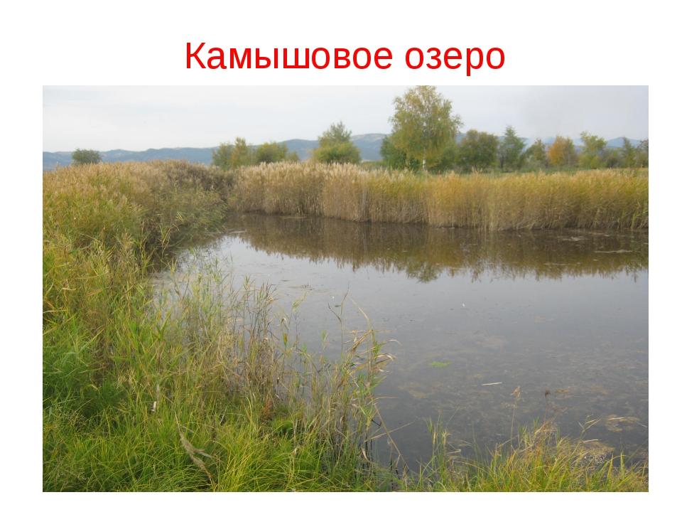 Камышовое озеро