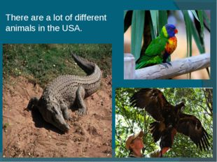 There are a lot of different animals in the USA.