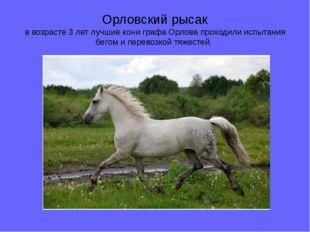 Орловский рысак в возрасте 3 лет лучшие кони графа Орлова проходили испытания