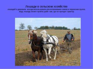 Лошади в сельском хозяйстве лошадей в деревнях всегда использовали для вспахи