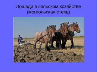 Лошади в сельском хозяйстве (монгольская степь)