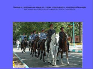 Лошади в современном городе на страже правопорядка, отряд конной полиции а ка