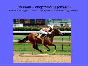 Лошади – спортсмены (скачки) скачки и выездка – очень популярные и красивые в