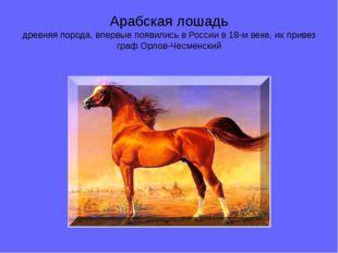 Арабская лошадь древняя порода, впервые появились в России в 18-м веке, их пр