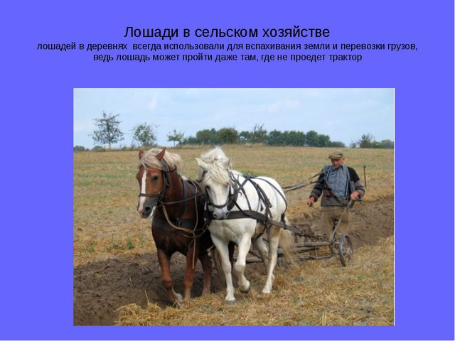 Лошади в сельском хозяйстве лошадей в деревнях всегда использовали для вспахи...