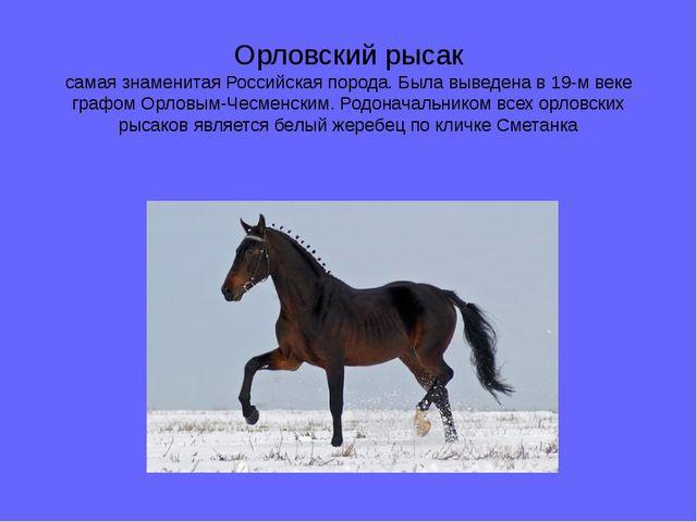 Орловский рысак самая знаменитая Российская порода. Была выведена в 19-м веке...