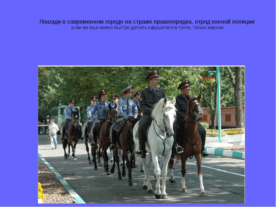 Лошади в современном городе на страже правопорядка, отряд конной полиции а ка...