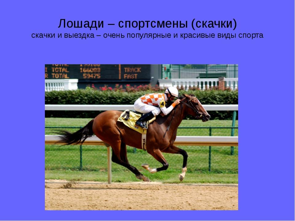 Лошади – спортсмены (скачки) скачки и выездка – очень популярные и красивые в...