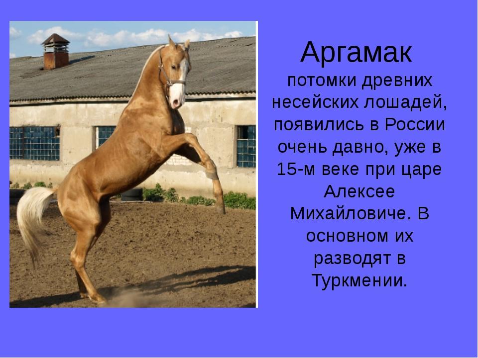 Аргамак потомки древних несейских лошадей, появились в России очень давно, уж...