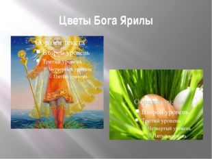 Цветы Бога Ярилы