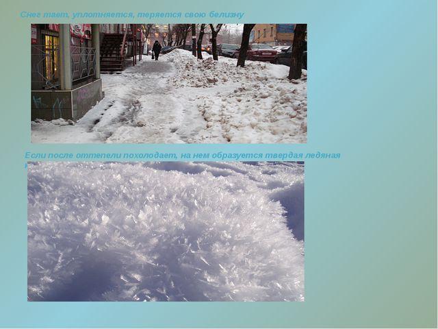 Снег тает, уплотняется, теряется свою белизну Если после оттепели похолодает...