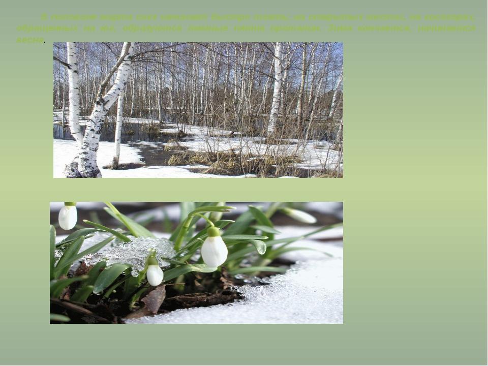 В половине марта снег начинает быстро таять; на открытых местах, на косогорах...