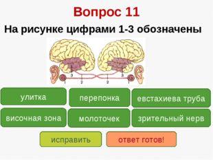 Вопрос 11 На рисунке цифрами 1-3 обозначены зрительный нерв височная зона ули