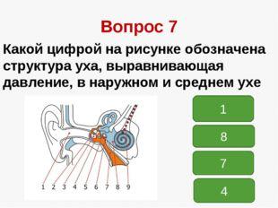 Вопрос 7 Какой цифрой на рисунке обозначена структура уха, выравнивающая давл