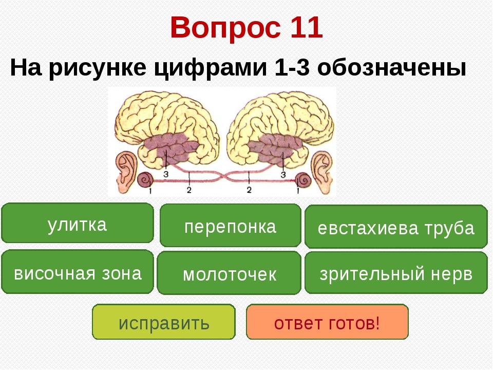 Вопрос 11 На рисунке цифрами 1-3 обозначены зрительный нерв височная зона ули...