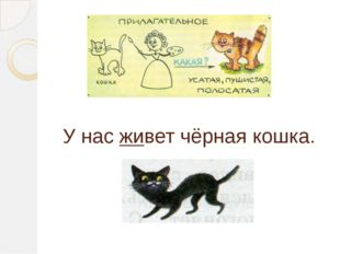 У нас живет чёрная кошка.