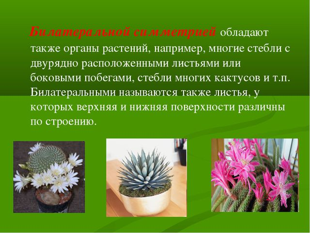 Билатеральной симметрией обладают также органы растений, например, многие ст...