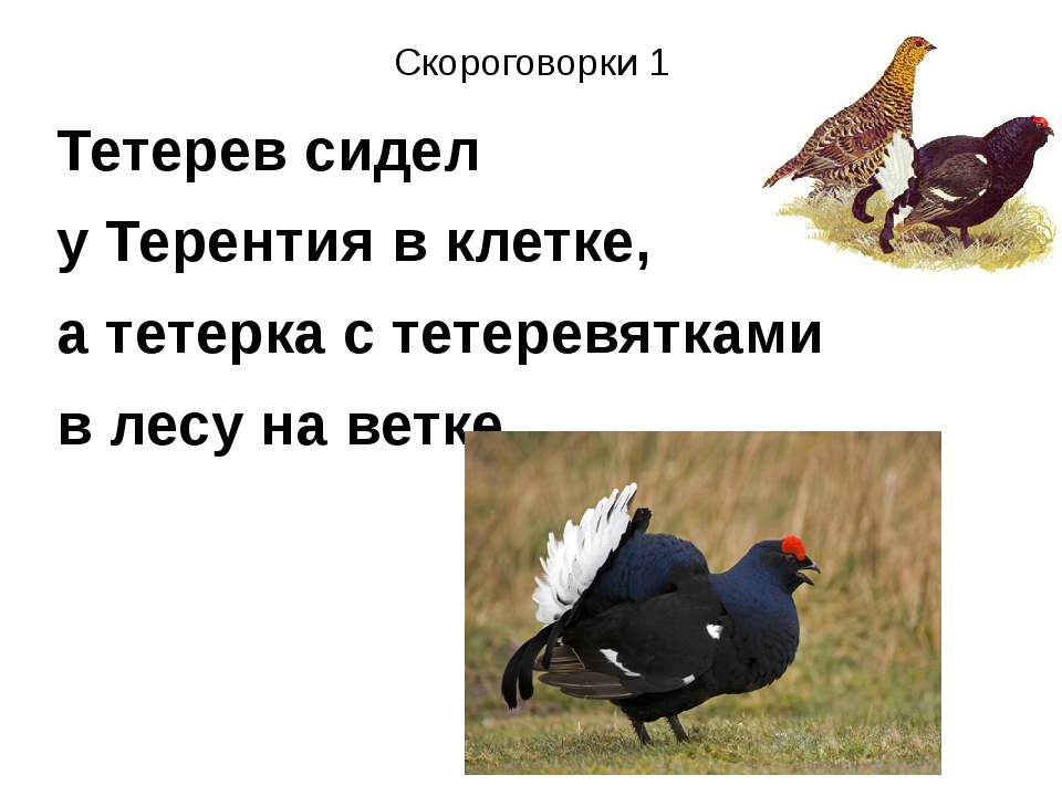 Скороговорки 1 Тетерев сидел у Терентия в клетке, а тетерка с тетеревятками в...