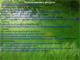 Использовались ресурсы: http://galleria-cvetov.org/vse-dlya-tsvetov.html торф