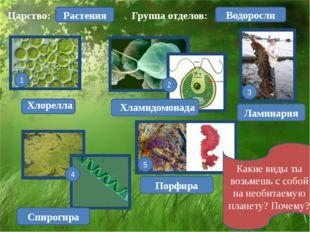 Царство: Растения Хлорелла 1 Ламинария Спирогира Порфира Хламидомонада 2 3 5