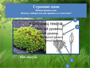 Строение мхов Назови органы мхов. Почему у водорослей нет органов, а у мхов е