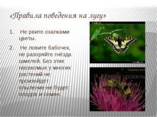 «Правила поведения на лугу» 1. Не рвите охапками цветы. 2. Не ловите бабочек,