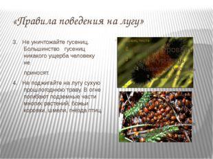 «Правила поведения на лугу» 3. Не уничтожайте гусениц. Большинство гусениц ни