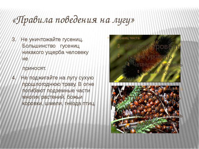 «Правила поведения на лугу» 3. Не уничтожайте гусениц. Большинство гусениц ни...