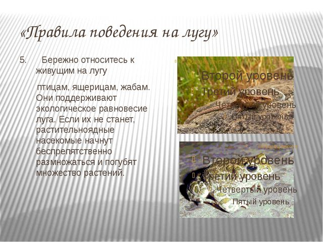 «Правила поведения на лугу» 5. Бережно относитесь к живущим на лугу птицам, я...