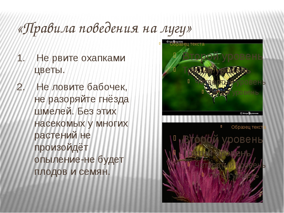 «Правила поведения на лугу» 1. Не рвите охапками цветы. 2. Не ловите бабочек,...