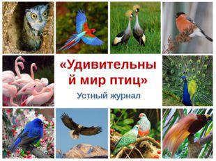 «Удивительный мир птиц» Устный журнал ProPowerPoint.Ru