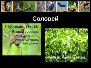 Соловей ProPowerPoint.Ru