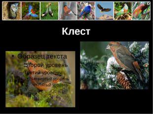 Клест ProPowerPoint.Ru