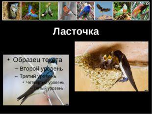 Ласточка ProPowerPoint.Ru