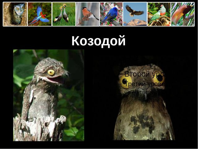 Козодой ProPowerPoint.Ru