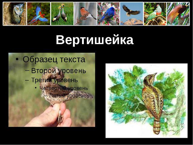 Вертишейка ProPowerPoint.Ru