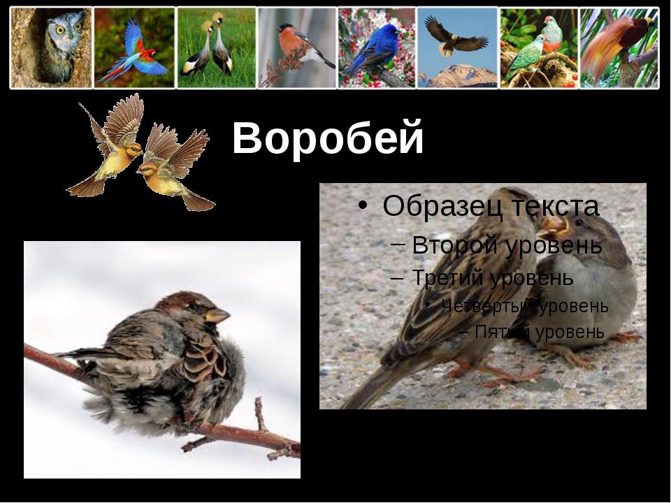 Воробей ProPowerPoint.Ru