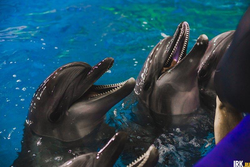 Дельфинарий в Иркутске Фоторепортажи Новости Иркутска: экономика, спорт, медицина, культура, происшествия
