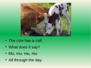 The cow has a calf. What does it say? Mu, mu, mu, mu All through the day.