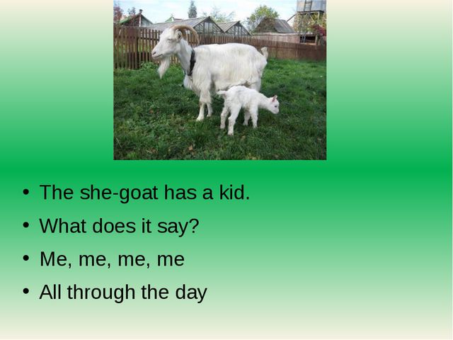 The she-goat has a kid. What does it say? Me, me, me, me All through the day