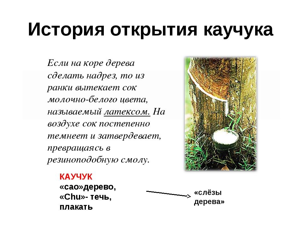 История открытия каучука Если на коре дерева сделать надрез, то из ранки выт...